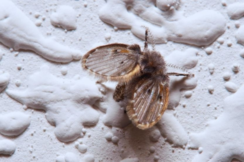 Tiny Black Bugs in the Bathroom